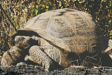 7 Day Galapagos Legend Including 3 Night Cruise