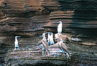 8 Day Galapagos Legend Tour Including 4 Night Cruise-B