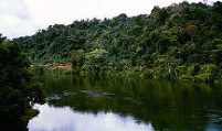 Suriname Discovery Land Only Tour Package